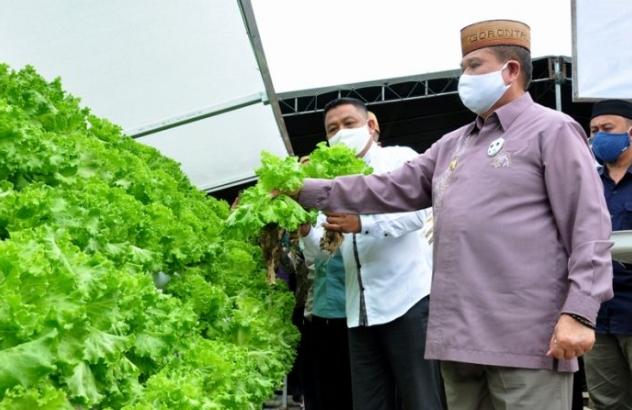 Wagub Gorontalo H. Idris Rahim memanen sayur di kebun P2L Desa Ulanta, Kecamatan Suwawa, Kabupaten Bone Bolango, Kamis (24/9/2020). (Foto : Haris – Humas)