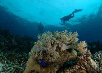 Pesona bawah laut Torsiaje. (F : Din Fachrudin).
