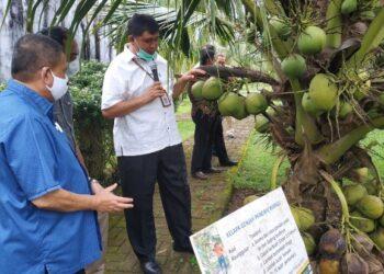 Wagub Gorontalo H. Idris Rahim (kiri) melihat jenis kelapa Genjah Pandan Wangi yang dikembangkan di Balit Palma Sulawesi Utara, Sabtu (13/2/2021). (Foto : Gusti)