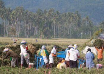 petani sawah di Provinsi Gorontalo/foto:Arfandi Liputan6.com