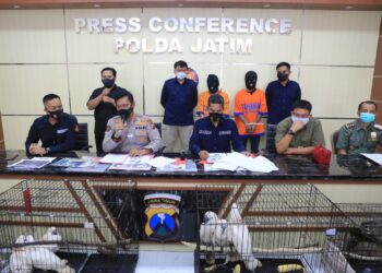 Polda Jatim saat konferensi pers kasus perdagangan satwa dilindungi. (Foto: Istimewa).