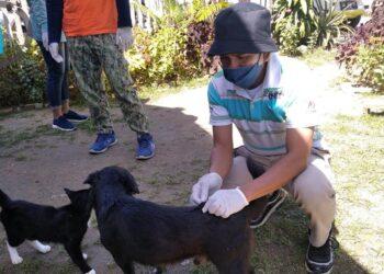 Waspadai Rabies Puluhan Anjing dan Kucing Peliharaan di Bonebol Divaksin