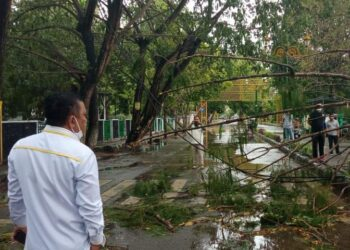 Wakil Bupati Kabupaten Gorontalo, Hendra Hemeto, meninjau pohon tumbang di Kawasan Kantor Dinas Kominfo Kabupaten Gorontalo. (Foto : Istimewa).