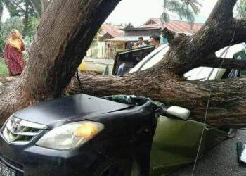 Kondisi satu unit Minibus yang tertimpa pohon trembesi. (Foto : Istimewa)