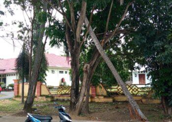 Pohon kelapa yang patah, tepat di depan Kantor DKP Pohuwato. (Foto : Prosesnews.id)