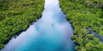 Hutan Mangrovee di Leboong, Belitung. BELITUNG INFO