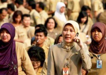 Para PNS di Indonesia timur diberi kesempatan untuk menjajal beasiswa afirmasi bidang manajemen administrasi publik di Universitas Gadjah Mada, Universitas Brawijaya, dan Universitas Sriwijaya.