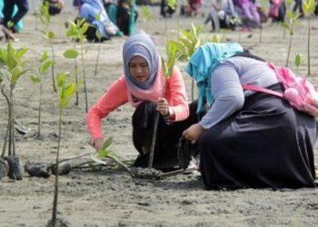 Ilustrasi - Mahasiswa menanam ribuan bibit mangrove di pantai Ujung Pancu, Kabupaten Aceh Besar, Aceh. ANTARA FOTO/ Ampelsa