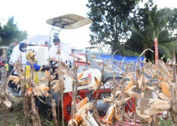 Menteri Perekonomian RI Panen Raya Jagung di Gorontalo